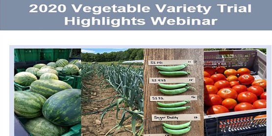 2020 Vegetable Variety Trial Highlights Webinar with picture of various vegetables beneath title
