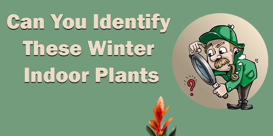 Picture of cartoon detective looking at mysterious flower. Title: Can You Identify These Indoor Winter Flowers