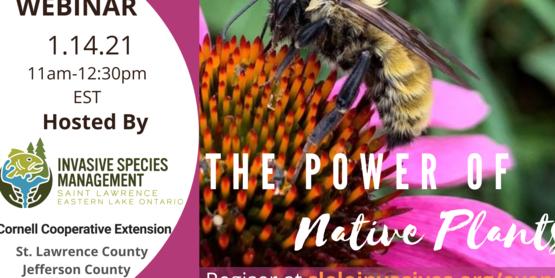 Power of Native Plants Webinar