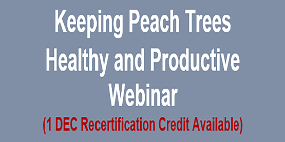 Keeping Peach Trees Happy and Healthy and Productive Webinar