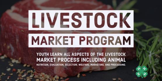 livestock market program