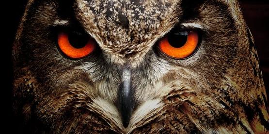 Owl head.