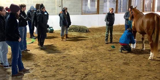 vet horse class