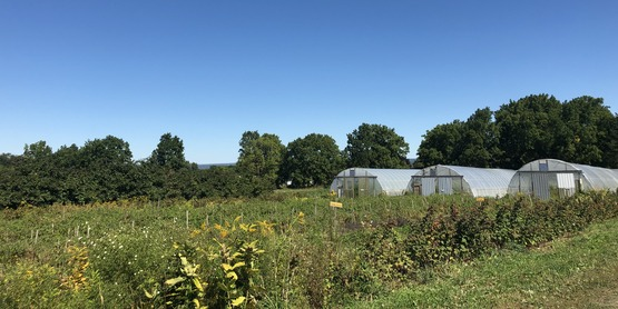Beneficial plants and a High Tunnel at Stick & Stone Farm