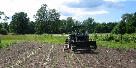 Planting Brussels sprouts at Stick & Stone farm