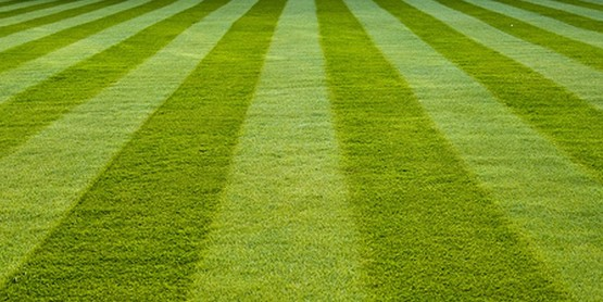 Fertilize your lawn to keep it healthy and free from pests.
