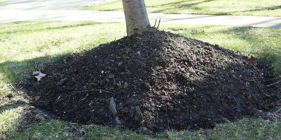Be careful not to over mulch your trees.