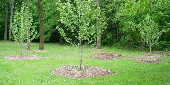 Mulch can be organic or inorganic. It just depends on your needs and preferences.