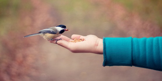 A bird eats from a hand.