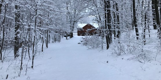 snowy forest with house