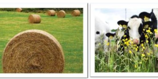 2021 Advanced Hay & Pasture School