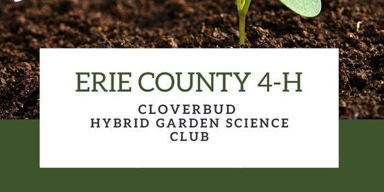 Cloverbud Hybrid Club