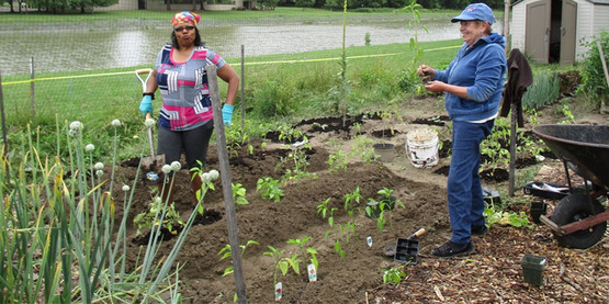 Joyce Spears (l) and Donna DiCostanza tending their plot in the Floral Avenue Community Garden in 2016