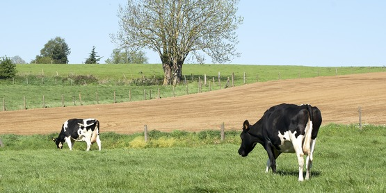 Cornell Cooperative Extension Regional Agriculture Specialists will present a virtual learning opportunity on Dairy Grazing every Tuesday from March 2nd – April 6th, 2021.