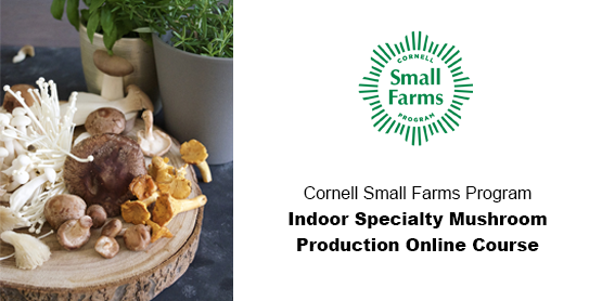 Cornell Small Farms Program Indoor Specialty Mushroom Production Online Course
