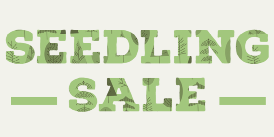 seedling sale