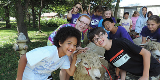 kids with sheep at the Suffolk County Farm Camp