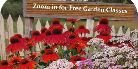 Spring 2021 Zoom Garden Classes