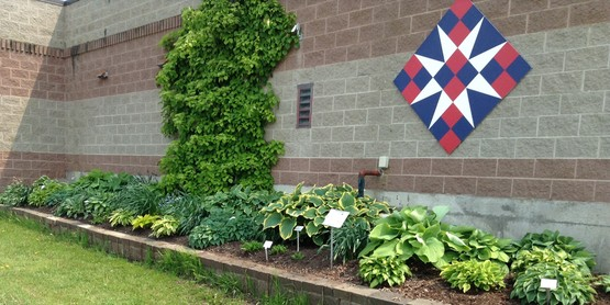 The Hosta garden along the north side of the CCE Building