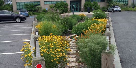 Rain Garden planted by SC Soil and Water Conservation District at CCE in Riverhead, NY.