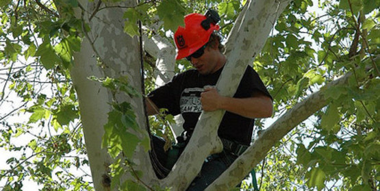 Always follow safety protocols when working in and around trees.