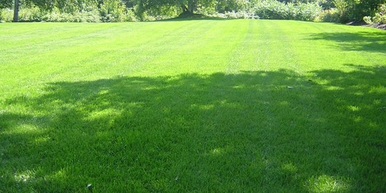 You can have a nice lawn in the shade.