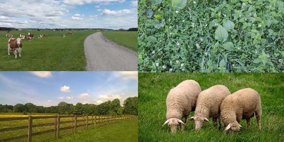 pasture pictures