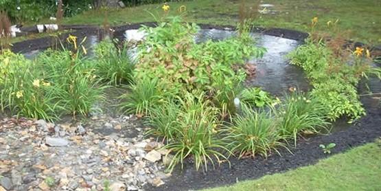 rain garden at work