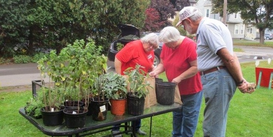Folks In The Area Look Forward To The Plant Sales Held By Master Gardeners.