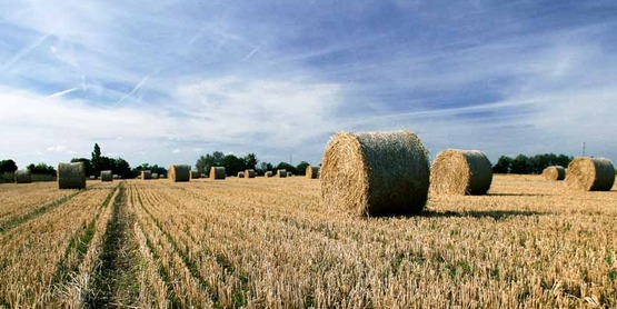 Landscape photo of hay bales in a field at harvest time, image captured in Faversham, Kent, England.