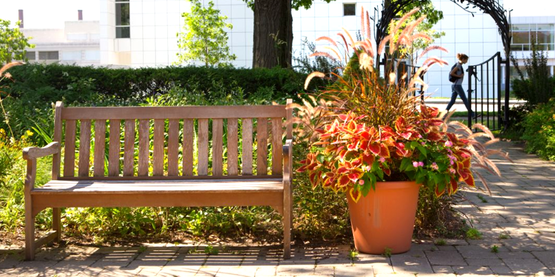 Minns Garden on the Cornell University campus (Cornell University Photography).  garden bench, container garden
