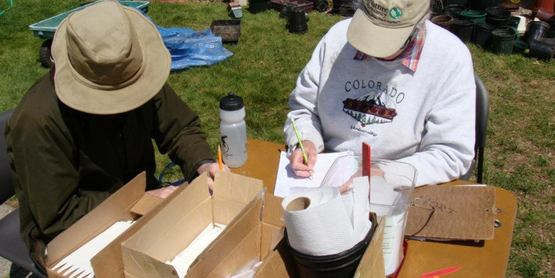 Volunteers hand write plant botanical names on labels while potting up over 2000 plants!
