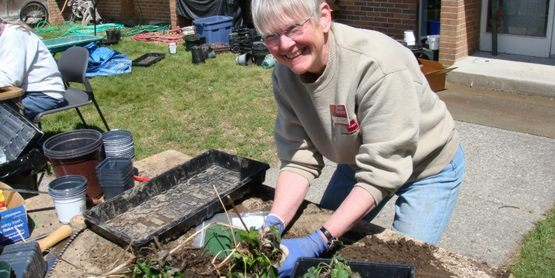 Perennials arrive in clumps, freshly dug from Master Gardener Volunteers' gardens.
