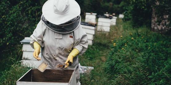 Apiray Bee Hives