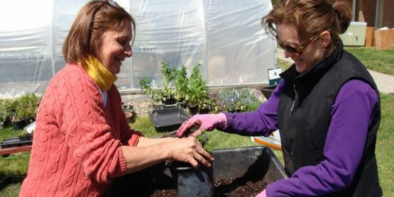 Master Gardener volunteers dividing plants at the Dutchess County Farm & Home Center.