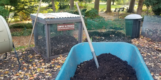 Finished compost  in wheelbarrow  in front of compost bins.