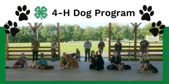 dog program