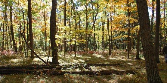 woods, Yates County