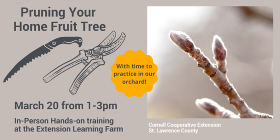 Graphic for Pruning your home fruit tree class