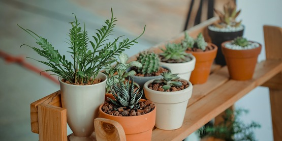 Indoor potted plants on a wooden plant stand.