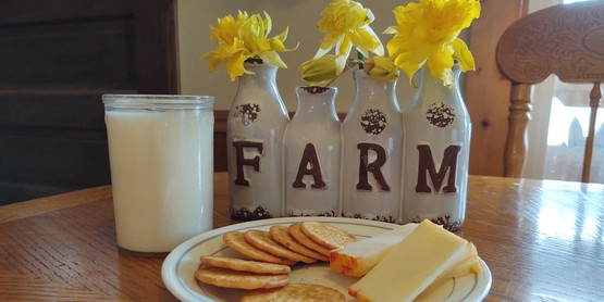 glass of milk with plate of cheese and crackers. Farm flower pot with daffodils.
