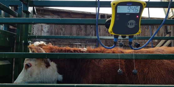 steer in weight chute
