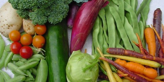 Some of the vegetables you will learn about.
