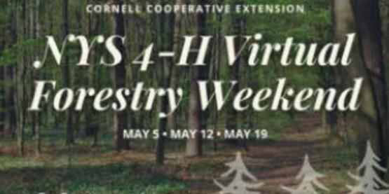 Virtual Forestry Weekend