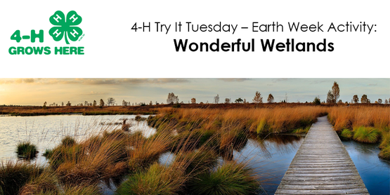 4H Try It Tuesday Earth Week Activity Wonderful Wetlands