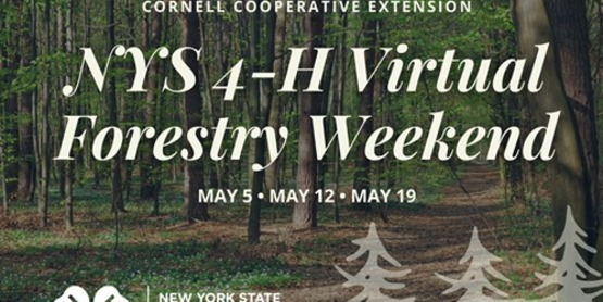 NYS 4-H Forestry Weekend