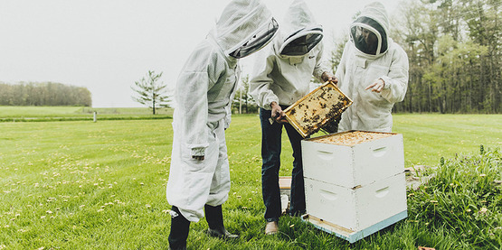 Members of the Cornell Dyce Lab wearing beekeeping gear, working with a hive in a field