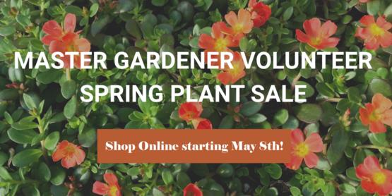 mg plant sale new