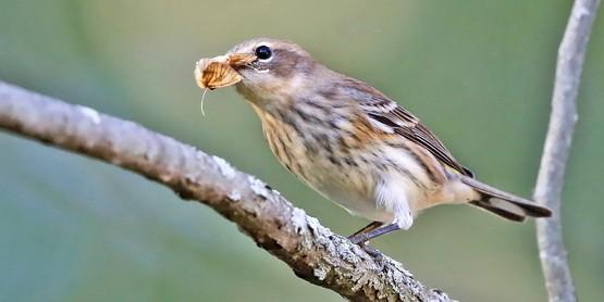 Bird PPP