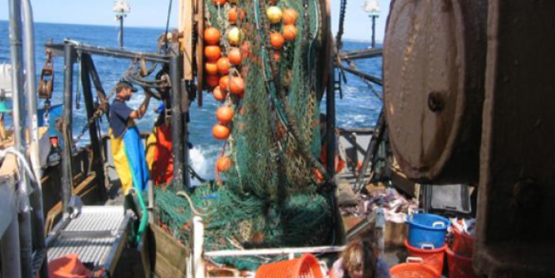 bycatch reduction 1